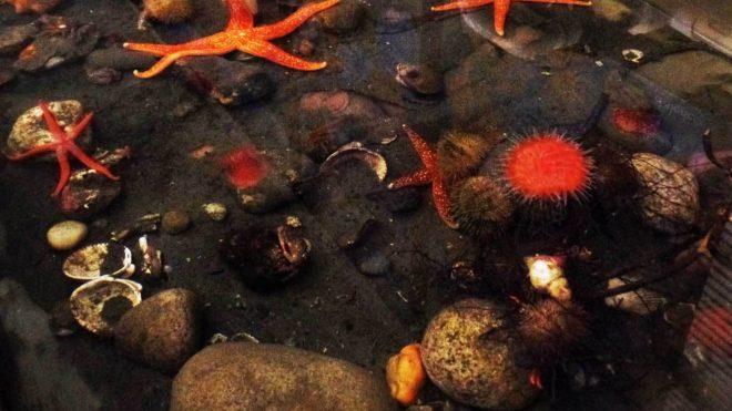Showcasing Local Marine Life!