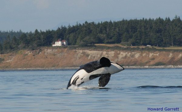 Outdoor Ed Programs & The Orca Network