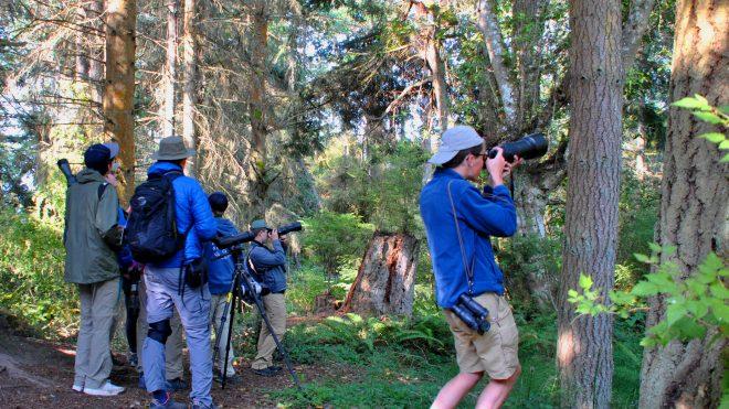 Young Birders Ecotourism Tour Includes Camp Casey